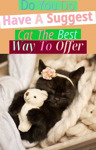 Do You Do Have A Suggest Cat? The Best Way To Offer